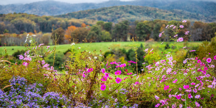 Blue Ridge Mountains Charlottesville